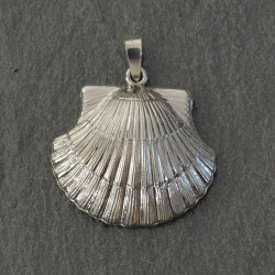 Silver Scallop Shell